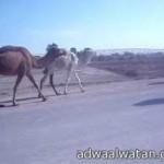 بالفيديو… سيارة  مليونير سعودي تثير ضجةً في لندن