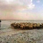 أمين منطقة حائل يُوقّع عقوداً لمشروعات تنموية تجاوزت قيمتها 7 ملايين ريال سعودي