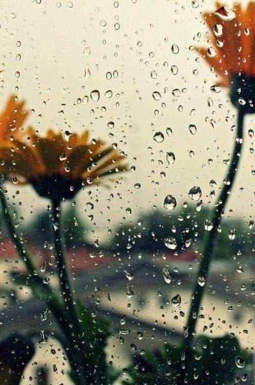 قِنِّينة مطر