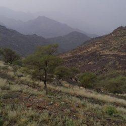 الجيش اليمني يحرر آخر نقطة بجبال البياض شرق صنعاء