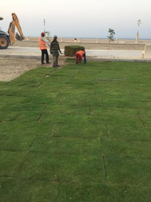 بلدية الخفجي تستهدف زراعة 57 ألف م2 من المسطحات الخضراء في المحافظة