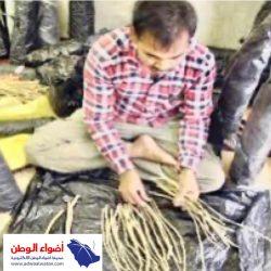 """""""فهد الشعلان"""" رئيساً تنفيذياً لنادي الشباب"""