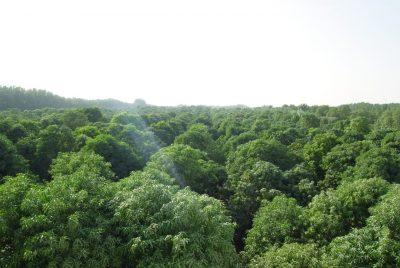 الغامدي:  إنتاج المانجو يتجاوز ٤٠ الف طن و ٤٠٠ الف شجرة سنوياً بالقنفذة