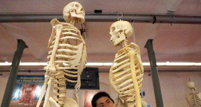 دراسة: هل يكمن مفتاح مكافحة الشيخوخة في عظامنا؟