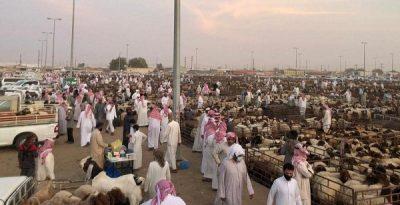 """بالفيديو والصور..الإقبال الكبير على شراء الأضاحي يرفع أسعار """"الماشية"""" في سوق حفرالباطن"""