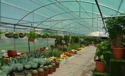أمانة الطائف تشرع في زراعة مليون شتلة زهور وورود