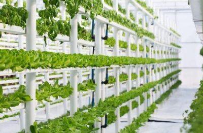 """""""التنمية الزراعية"""" يمول مشروعاً لـ""""الزراعة بدون تربة"""" بـ 76 مليون ريال"""