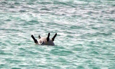 """""""التحالف"""": اكتشاف وتدمير 5 ألغام إيرانية الصنع في البحر الأحمر"""
