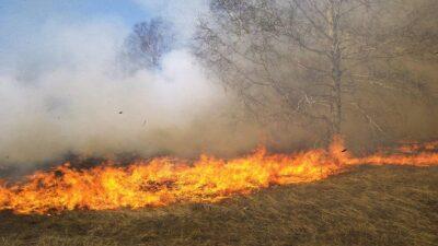 إخماد حريق كبير قرب القدس بعد إجلاء سكان عدة قرى