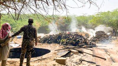 ضبط 3 مقيمين بمكة لقطعهم الأشجار الخضراء لتحويلها إلى فحم