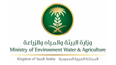 وزارة البيئة تنفي وجود زيادة في نسبة النترات بالخضار