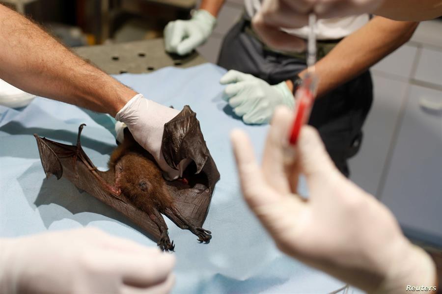 """باحثون صينيون يكتشفون مجموعة جديدة من فيروسات كورونا في الخفافيش تنتقل إلى """"البشر"""""""
