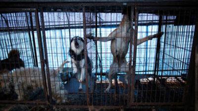 كوريا الجنوبية تدرس منع تنازل لحوم الكلاب