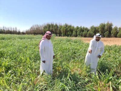 الإرشاد الزراعي بمكتب وزارة البيئة والمياه والزراعة بمحافظة حفرالباطن يواصل حملاته الإرشادية