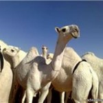 بلدي بقعاء : مشروع نزع ملكية الأراضي الزراعية على طاولة الوزير